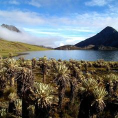 A beautiful mountain lake surrounded by plants in El Cocuy National Park Colombia Travel, National Parks, Destinations, River, Mountains, Instagram Posts, Plants, Outdoor, Beautiful