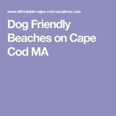 Dog Friendly Beaches on Cape Cod MA