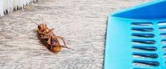 Les utilisations méconnues de l'huile multifonction WD-40 pour la maison Wd 40, Conscience, Cool Stuff, Homemade Drain Cleaner, Cleanser, Helpful Tips, Cleaning Tips, Get Stickers Off