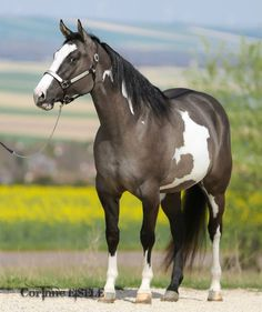 Definitely my dream horse