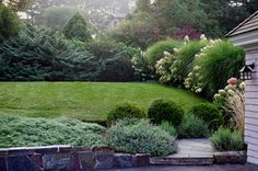 Nice combination of evergreen shrubbery, hydrangeas and lawn!