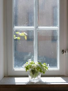 Window & Flowers