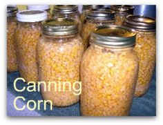 Preserving corn at home, canning, dehydrating, pickling, corn cob jelly!