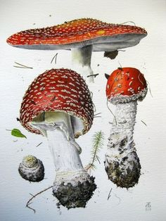 Stunning Draw a Fashionable Dress Ideas. Exhilarating Draw a Fashionable Dress Ideas. Mushroom Drawing, Mushroom Art, Botanical Drawings, Botanical Prints, Forest Illustration, Nature Drawing, Watercolor And Ink, Vintage Flowers, Stuffed Mushrooms