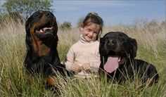 Calming A Fear Of Dogs HELP YOUR CHILD OVERCOME FEAR