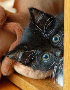 Sosie the kitten! ^=^