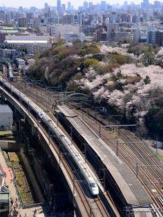 桜咲く飛鳥山と東北新幹線