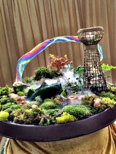 @Shirley Bovshow   made these beautiful & lush tabletop gardens using a wide variety of mosses! #HomeandFamily #HomeandFamilyTV #gardens #TabletopGardens #miniature #MossGardens