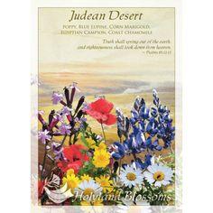 http://www.holylandblossoms.com/the_desert#.UWswyLVJOAg #Bouquets #JudeanDesert #HolylandBlossoms