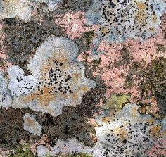 pink lichen - there really isn't a colour that lichen doesn't come in Patterns In Nature, Textures Patterns, Growth And Decay, Plant Fungus, Mushroom Fungi, Color Shapes, Natural Texture, Nature Photography, Flora
