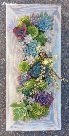 200 pcs/bag Mini Succulent seeds blue Lithops Seeds ,Potted Plants Perennial suculentas Cactus seeds Planta Absorb Radiation