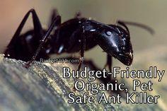 Carpenter Ant Killer