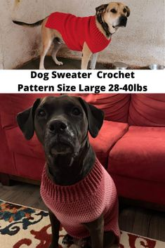 The Size Large Dog Sweater Crochet Pattern will fit your animal lbs with sweater measuring approximately x Crochet Dog Sweater Free Pattern, Dog Pattern, Baby Knitting Patterns, Crochet Patterns, Large Dog Sweaters, Pet Sweaters, Large Dog Clothes, Pet Clothes, Dog Clothing