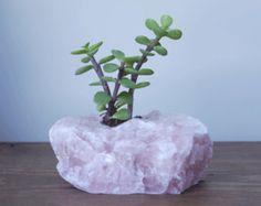 Rose Quartz Raw Crystal Succulent Planter  - Healing Crystals and Stones - Crystal Decor