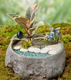 Rock Fairy GardenRock Fairy Garden