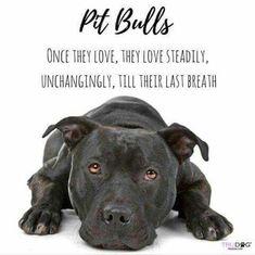Pit bulls...steadfast companions. #pitbull Bull Terriers, Terrier Dogs, Pitbull Terrier, I Love Dogs, Cute Dogs, Awesome Dogs, Pitbulls, Dog Rules, Pit Bull Love