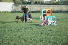 Korral Dog Training & Supply Center offers the best Sarasota dog training and boarding services. We treat your dogs as one of our own! Dog Training Classes, Petting Zoo, Zoo Animals, Pet Store, Homestead, Your Dog, Pets