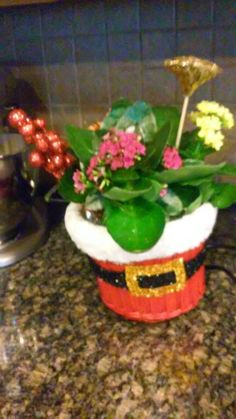 trio kalanchoe holiday plant