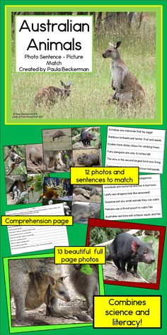 Stunning photos of iconic Australian animals (koala, kangaroo, wallaby, emu, wombat, echidna and more) will engage your students in this science & literacy center. TpT $