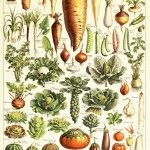 What veggies to plant and grow in Central California for fall and winter.