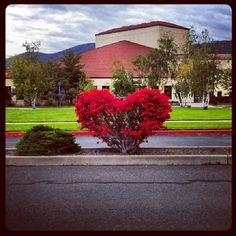 Heart tree in front of Eastern Oregon University Pierce Library, La Grande, Oregon  (from Eastern University Pierce Library)