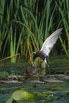 """Wetlands photography ideas from EPA.  Great inspiration for our """"Camera Kids""""."""