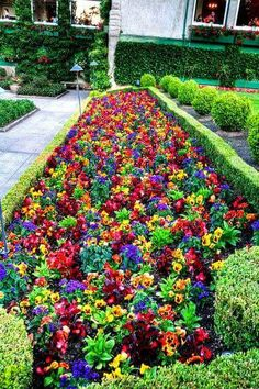 Street garden.