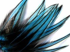 long feathers - Google Search