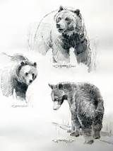 Bear Drawing - Cliparts.co