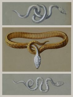 Boucheron introduces Serpent Bohème | The Parisian Eye