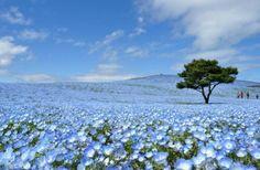 春・夏限定の絶景!日本各地にある美しすぎるカラフルなお花畑【色別まとめ】 | RETRIP