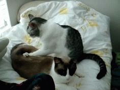 cat massage :)