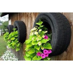 Nice idea with tyres, have to be careful about leeching of chemicals from the tyres into the plants, but not a prob if you are not going to eat them! Could also paint the tyres...