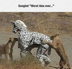 Funny Pictures of the Day!