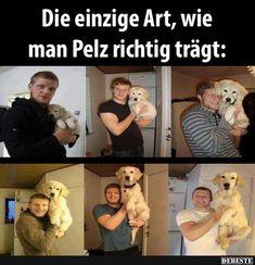 All Dogs, Teddy Bear, Animals, Facebook, Videos, Fur, Funny Pics, Jokes, Funny Stuff
