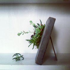 fun! 7 x 7 Vertical Succulent Planter Arrangement by VerticalFlora, $45.00
