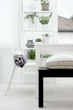 Indoor Plants - refreshing and adding life to the home x