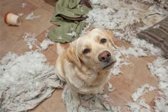 guilty dogs | Guilty dog
