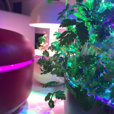 @annalamminen Kun joululahjat lähtee lapasesta. Plantuimadness ❤️ #plantui Christmas Bulbs, Anna, Holiday Decor, Plants, Instagram, Home Decor, Decoration Home, Christmas Light Bulbs, Room Decor
