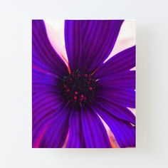 Purple Flower Photos, Purple Flowers, Purple Daisy, Flower Canvas, Off The Wall, Canvas Prints, Art Prints, Beautiful Flowers, Tapestry