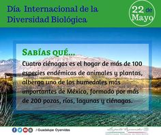 Etiqueta #DíaInternacionalDeLaDiversidadBiológica en Twitter