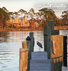 Keep an eye on the sky for some of South Walton's beautiful winged residents!