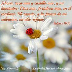 Los ojos del Señor están sobre los justos...Salmos 18:2