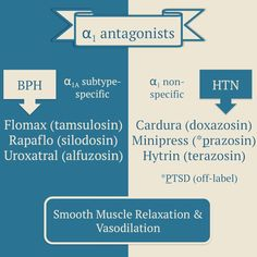 receptors are found throughout the body and cause vasoconstriction when activated. blockers cause smooth. Alpha Blocker, Gout Relief, Muscle Relaxation, Rn School, Critical Care Nursing, Cardiac Nursing, Medicine Student, Muscle Protein, Pharmacology