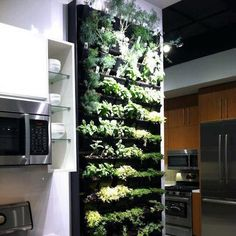 Herb Wall in Kitchen