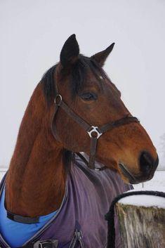 Pferde Kreisspiel Children, Kids, Horses, Education, Animals, Erika, Alter, Massage, Material