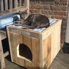 DIY cat house ideas can be made of simple, repurposed materials. Feral Cat House, Feral Cat Shelter, Outdoor Cat Shelter, Cat House Diy, Outdoor Cats, Feral Cats, Cat House Outdoor, Outside Cat House, Litter Box Covers