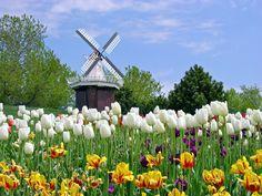 Holland Tulip Gardens (btdt)