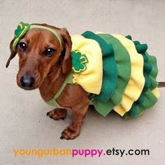 weenie dogs | The Long and Short of it All: A Dachshund Dog News Magazine: Are You ...