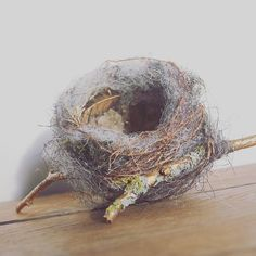 Nicola Coe Art (@nicolacoeajournal) • Instagram photos and videos Egg Nest, Coconut, Photo And Video, Nature Inspired, Fruit, Bird, Instagram, Videos, Photos
